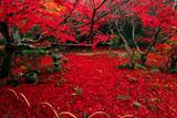 京都厭離庵 時雨紅葉