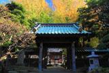 常立寺 山門とイチョウの黄葉
