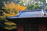 鎌倉北野神社 拝殿とイチョウの黄葉