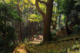 鎌倉北野神社 石段の散り落葉