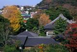 紅葉の藤沢常立寺