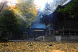 鎌倉御霊神社 光芒とイチョウの黄葉