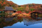称名寺 浄土式庭園の鴨