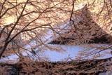 雪の華越しの神護寺金堂