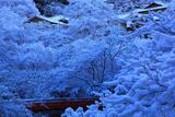 梅ケ畑 雪の花と指月橋