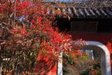 石峰寺 ナンテンと赤門