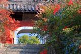 石峰寺 参道のナンテンと赤門