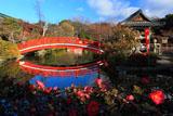 神泉苑 山茶花と法成橋