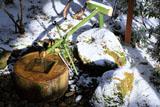 龍安寺 淡雪の知足の蹲踞