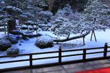 曼殊院 雪見庭園の白鶴