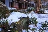 圓光寺 十牛之雪庭の万両