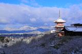雪の清水寺三重塔と京都市街