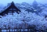 雪の永観堂