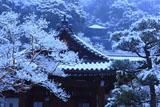 永観堂 雪の大玄関と多宝塔