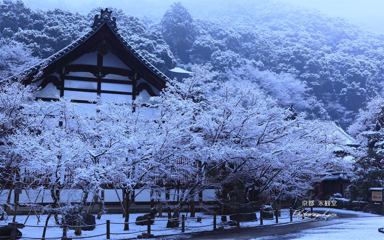 雪化粧した永観堂 壁紙