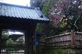 寿福寺 斑雪の境内と紅梅