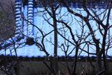 鎌倉葛原岡神社 白梅と雪化粧の神輿庫