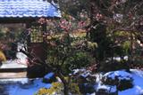 海蔵寺 梅と残雪