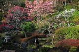 長谷寺の梅と河津桜