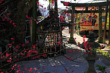鎌倉御霊神社 紅梅越しの江ノ電