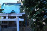 鎌倉熊野新宮 椿と本殿