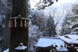 由岐神社 雪景色の大杉さん