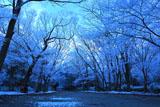 下鴨神社 糺ノ森の雪の花