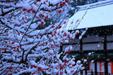 下鴨神社 雪中光琳の梅と橋殿