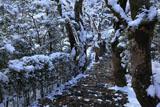 寂光院 斑雪の参道
