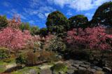 城南宮 春の山の枝垂れ梅