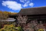 勧修寺 臥竜の老梅と書院