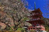 三室戸寺の梅と三重塔