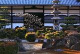 興聖寺中庭の梅
