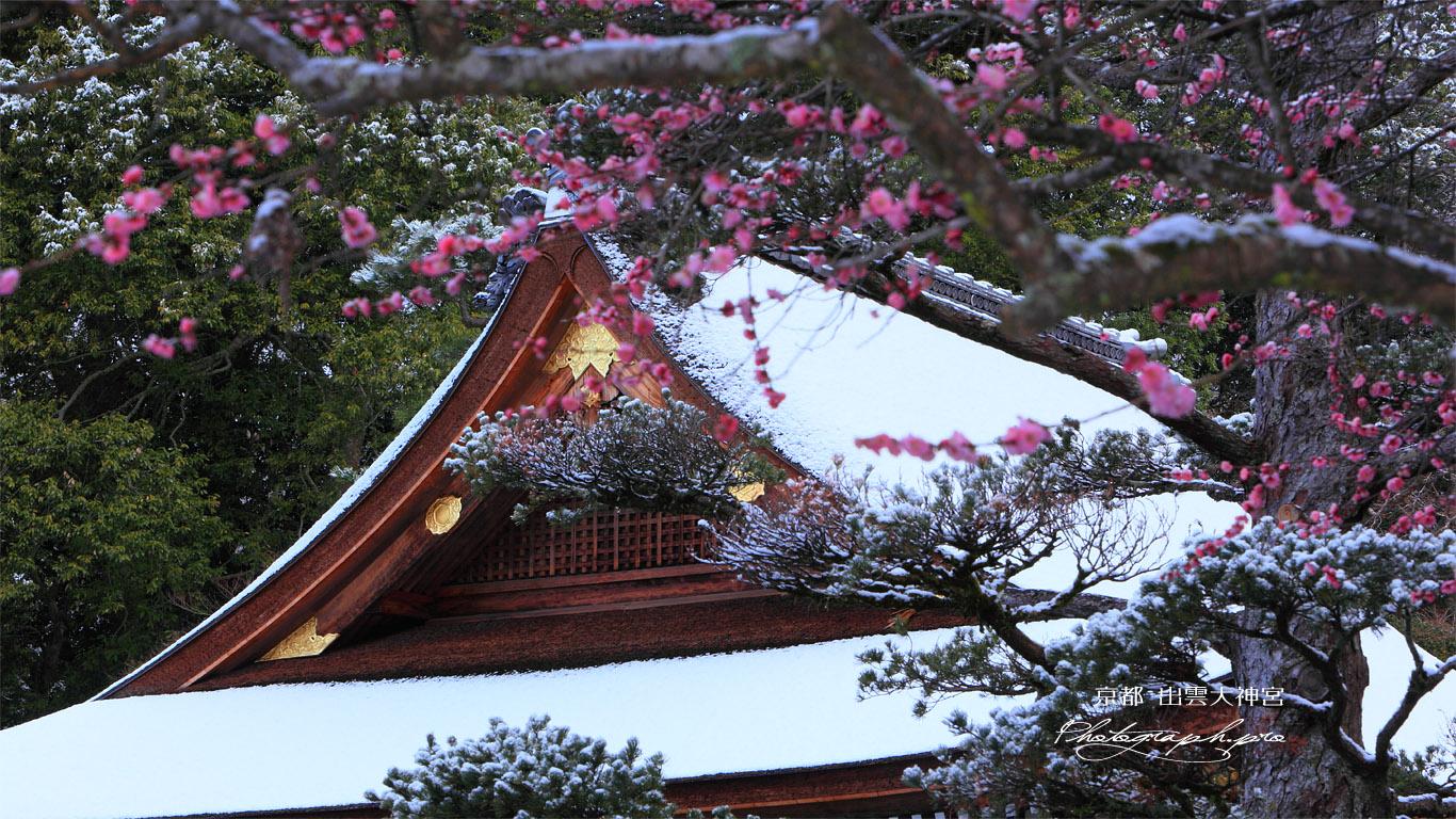 出雲大神宮 梅越しの雪化粧した拝殿 壁紙