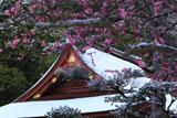出雲大神宮 梅越しの雪化粧した拝殿