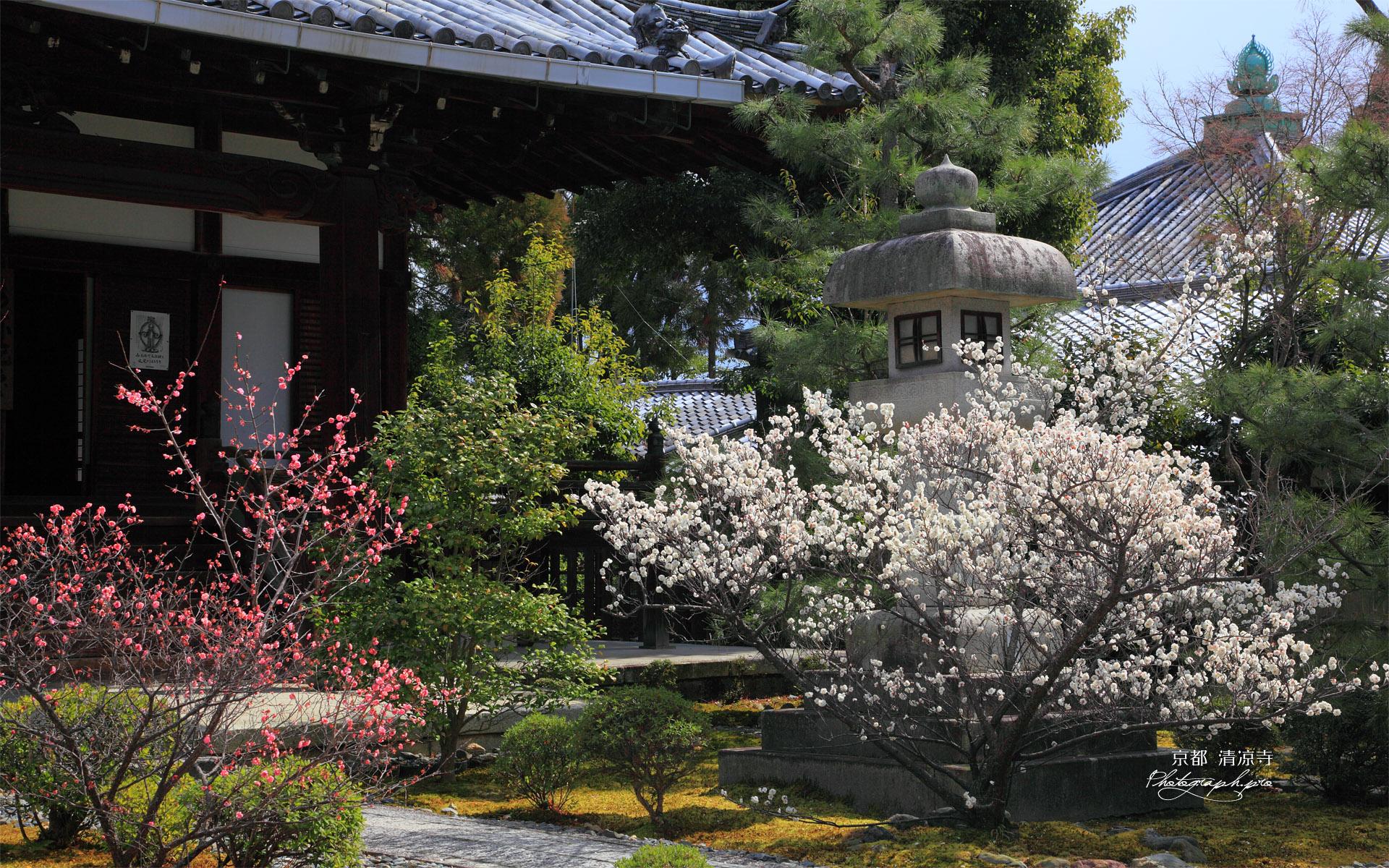 清凉寺 ウメ咲く阿弥陀堂