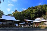 松尾大社 雪化粧の社殿