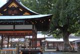 平野神社 薄化粧した境内と楠