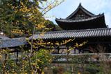 萬福寺中和園のサンシュユ