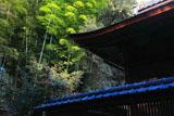 山崎聖天 聖天堂とツバキ