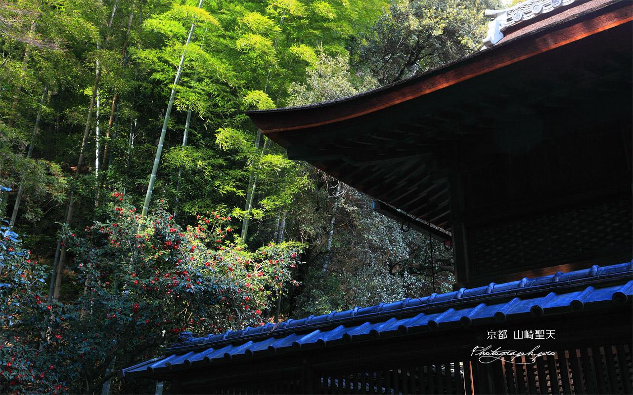 山崎聖天 聖天堂とツバキ 壁紙