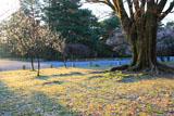 京都御苑 霜の降りた朝