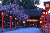 平野神社 魁桜と東神門
