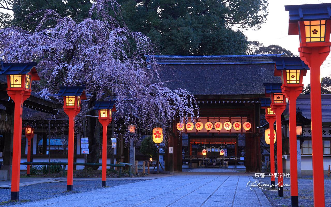 平野神社の日本の景色の壁紙