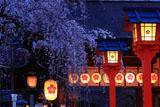 平野神社 宵の魁桜