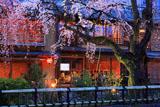 祇園白川宵桜ライトアップ