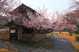 東本願寺 渉成園