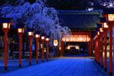 平野神社 満開の魁桜と東神門