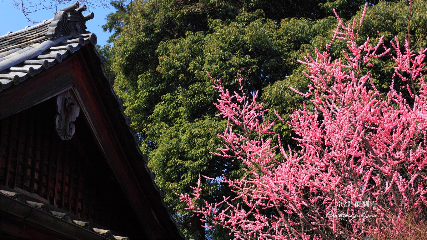 醍醐寺の桃 壁紙