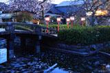 六孫王神社 神龍池と御衣黄桜